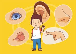 My Five Senses