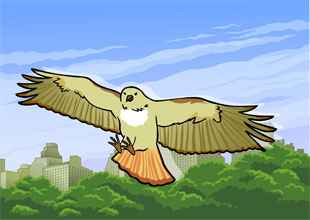 Pale Male: A Hawk Survives in New York City