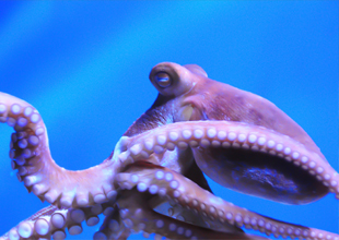 Meet the Animals 9: Octopus
