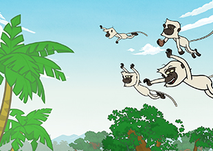 6. The Flight of the Monkeys