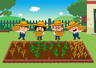 Oats, Peas, Beans and Barley Grow