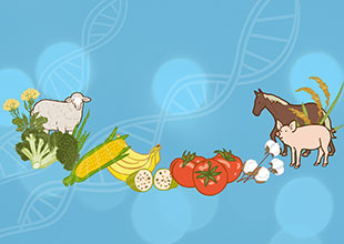 About GMOs